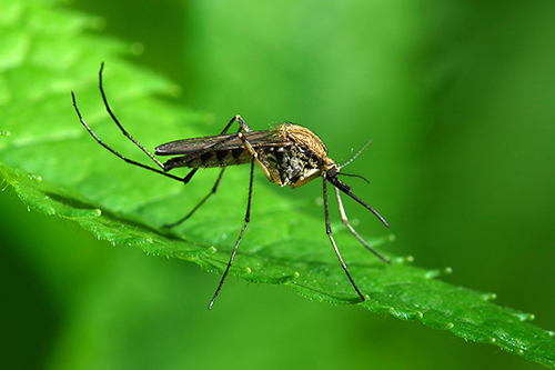 mosquito control services in Severna Park